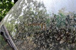В Ужгороде выпал дождь оранжевого цвета