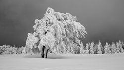 Глобальное потепление сделает зимы в Европе более холодными – эксперт