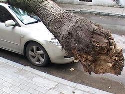 Последствия падений деревьев в Запорожье: ремонт авто и больница водителю