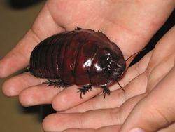 Уроки PR: конкурс по съеданию тараканов закончился смертью победителя