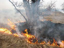 Какое место под Алматы самое пожароопасное?