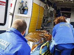 В Московской области от свинного гриппа умерла 11-летняя девочка