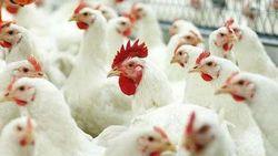 Казахстан ополчился против курятины из Украины и России