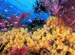 Найден новый вид кораллов, живущий только у острова Бали