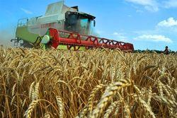 Небывалый урожай в Украине может разорить некоторые хозяйства - причины