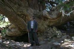 В Узбекистане нашли дерево, посаженное А. Македонским?