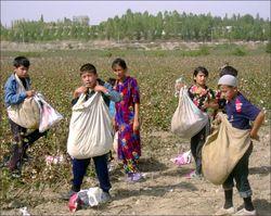 Узбекский хлопок как символ использования детского труда