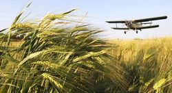 Стоимость зерна в России к февралю достигнет рекордной отметки