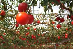 Почему зимой в Молдове исчезают собственные овощи?
