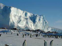 Литовцы намерены покорить Антарктиду