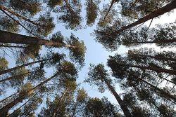 Инвесторам: как изменилось регуляторное законодательство Грузии в сфере лесопользования?