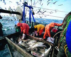 Чем обеспокоены литовские рыбаки?