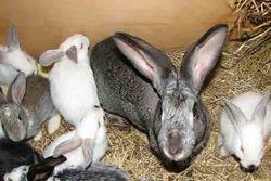 Инвесторам: в Грузии активно развивается кролиководство
