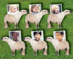 Бред Питт купил своим детям шесть пони
