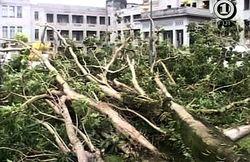 циклон «Томас»