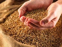 4 апреля начнутся зерновые интервенции в России