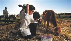 Почему армянские ветеринары грозят прекратить работу?