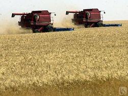 Сколько пшеницы экспортировала Северо-Казахстанская область?