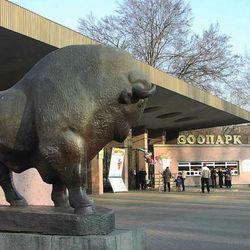 Уголовное дело возбуждено против экс-директора Киевского зоопарка