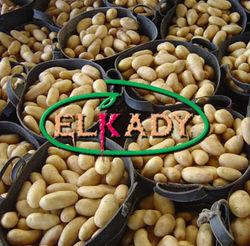 Инвесторам: Россия отказалась от египетского картофеля