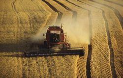 Почему, несмотря на хороший урожай, хлеб может подорожать?