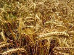 На сколько увеличилось производство сельхозпродукции в Армении?