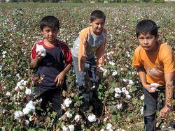 В Узбекистане по-прежнему применяется принудительный труд