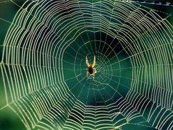 Мазда отзывает более 50 тысяч авто из-за... пауков