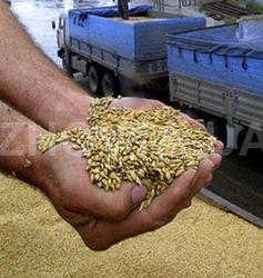 Россия начинает торговать зерном интервенционного фонда на бирже