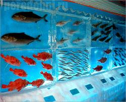 Почему «Ледяной аквариум» теперь так знаменит?