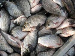 Армянские рыбоводы протестуют против решения правительства