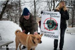 Зоозащитники вышли на улицы, чтобы защитить бездомных животных