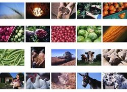 Нужно ли госрегулирование армянским аграриям?