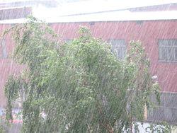 Какие убытки принесли дожди в Украину?