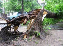 В Казахстане продадут деревья, поваленные ураганом