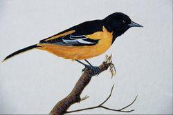 Почему птицы оранжевого цвета более подвержены радиации?