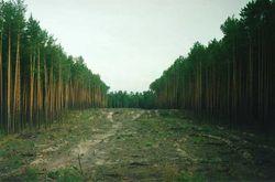 сокращение лесов