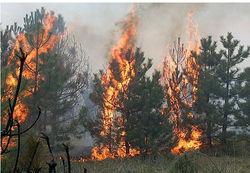 Каких убытков наносят пожары в России?