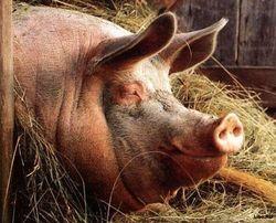 Чем грозят инвесторам ограничения РБ на импорт мяса из Литвы, Германии и России?