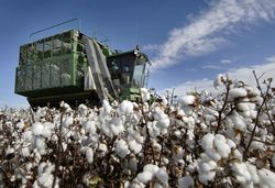 Инвесторам: будет ли и дальше дорожать хлопок в 2012 году?