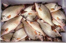 Как развивается рыбоводство в Узбекистане?