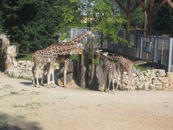 Какой сюрприз приготовил зоопарк Риги зимой?