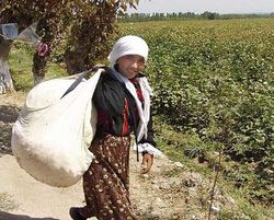 За что судили хлопкоробов в Узбекистане?