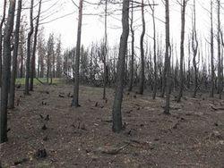 Когда восстановят леса Боржоми?