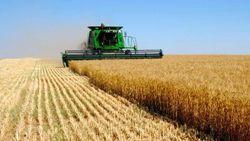В МинАПК планируют производить больше зерновых