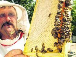 В мэрии таджикского города будет работать пчеловод