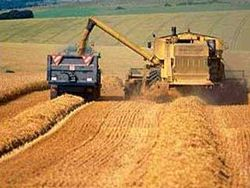 В Таджикистане приступили к сбору урожая
