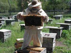Банки Узбекистана осуществляют целевую поддержку пчеловодства