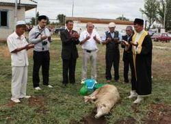 Как жертвоприношения в Узбекистане повлияли на местное население?