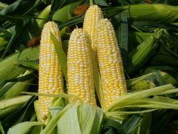 Чем выгодна покупка кол-опционов кукурузы на бирже?